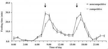 Figure 2. Hourly averages for feeding time (min) for growing dairy heifers fed noncompetitively (1 heifer/feed bin) or competitively (2 heifers/feed bin). Data are averaged per feed bin (expressed on a per animal basis) over 7 d and the 12 feed bins on each treatment. Arrows show feeding times.