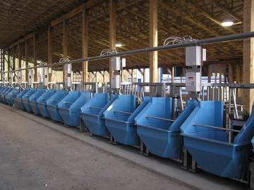 Figure 1: Electronically controlled feed bins used to study the feeding behaviour of growing heifers.